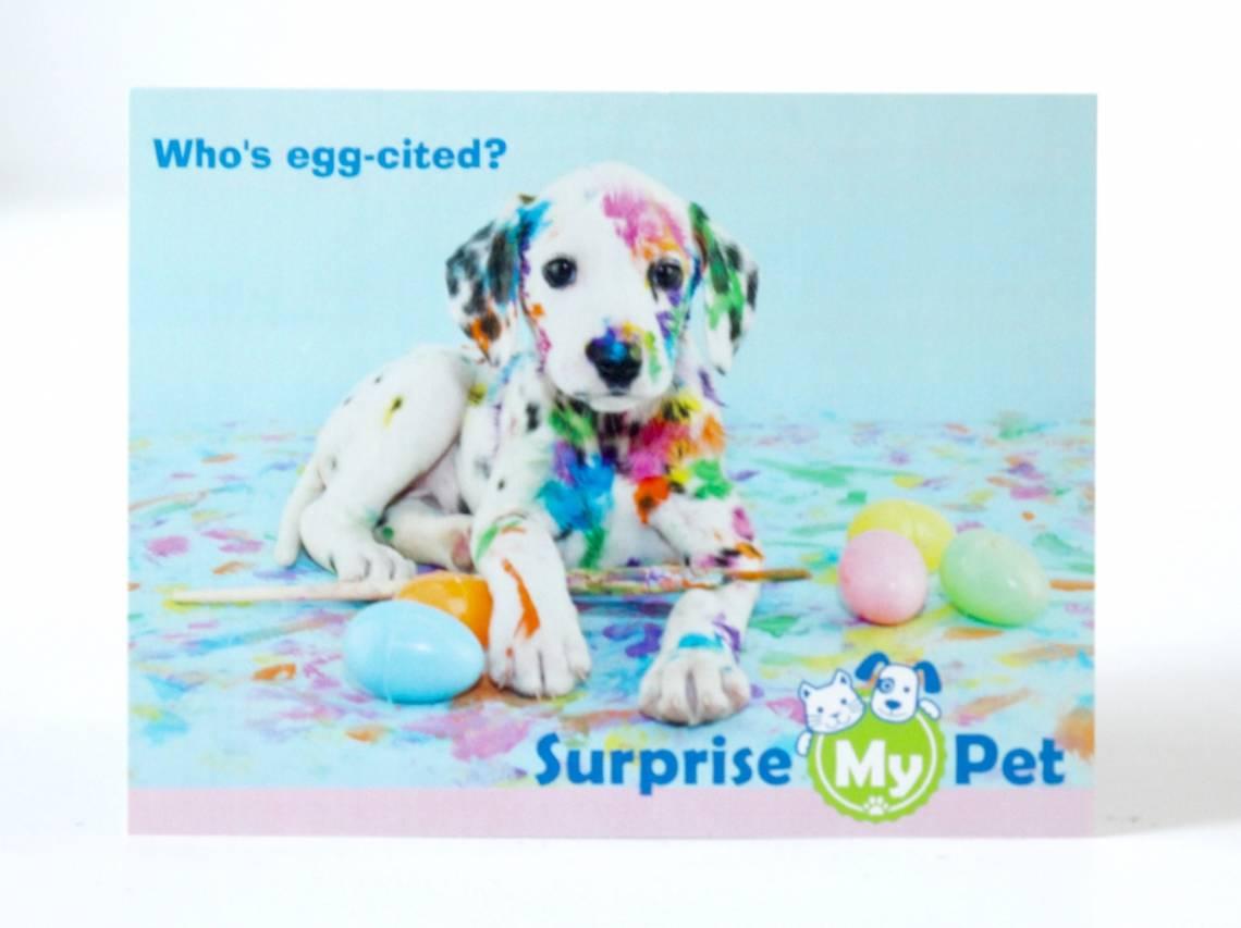 Suprise My Pet March 2016 15